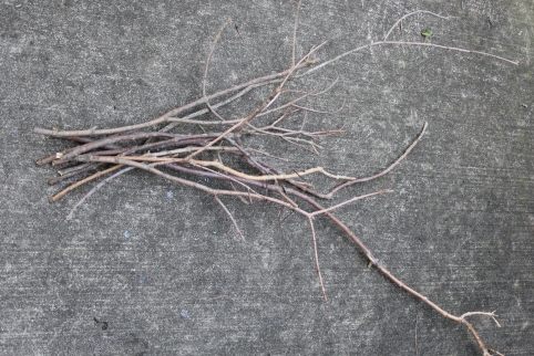 Bare branches and twigs
